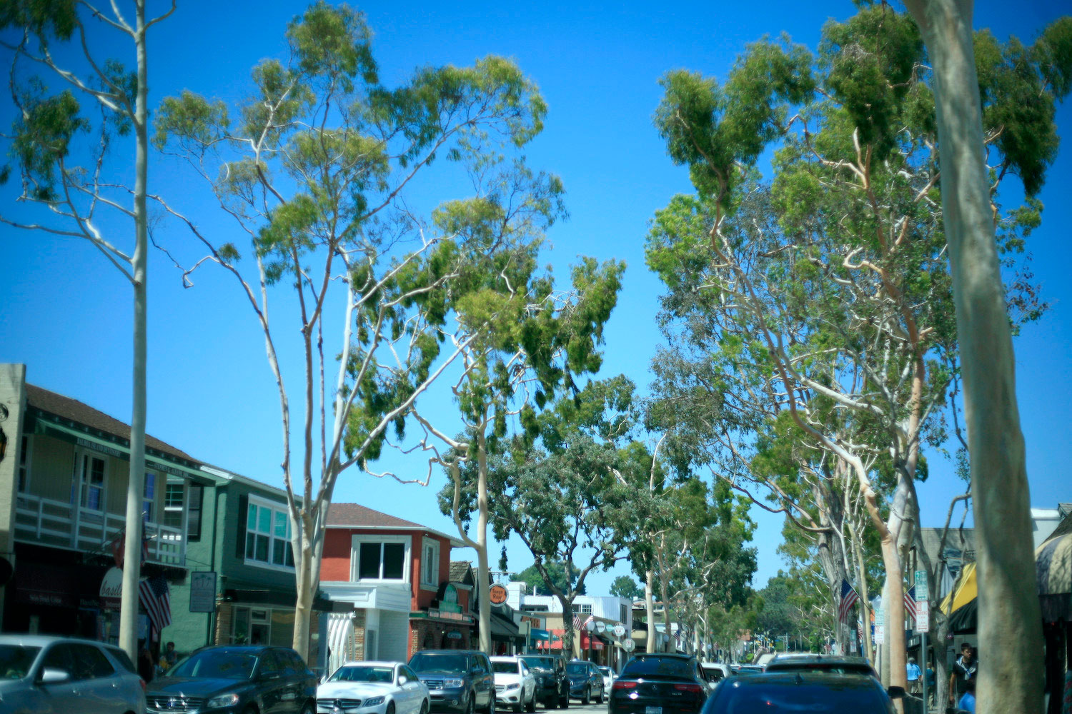 Commission approves Marine Ave trees