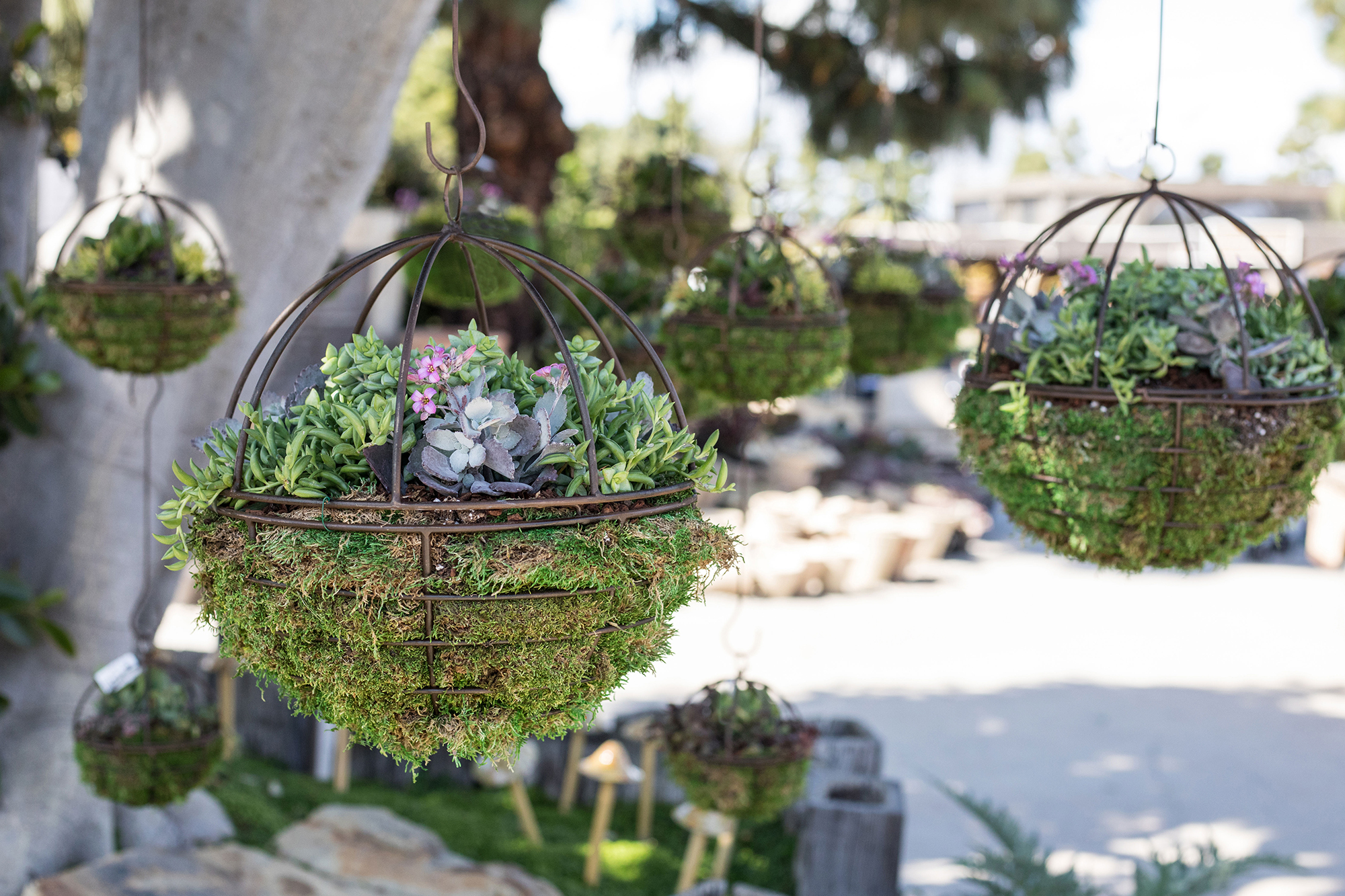 Hanging Succulent Orb Workshop with Onita Castillo 2.11