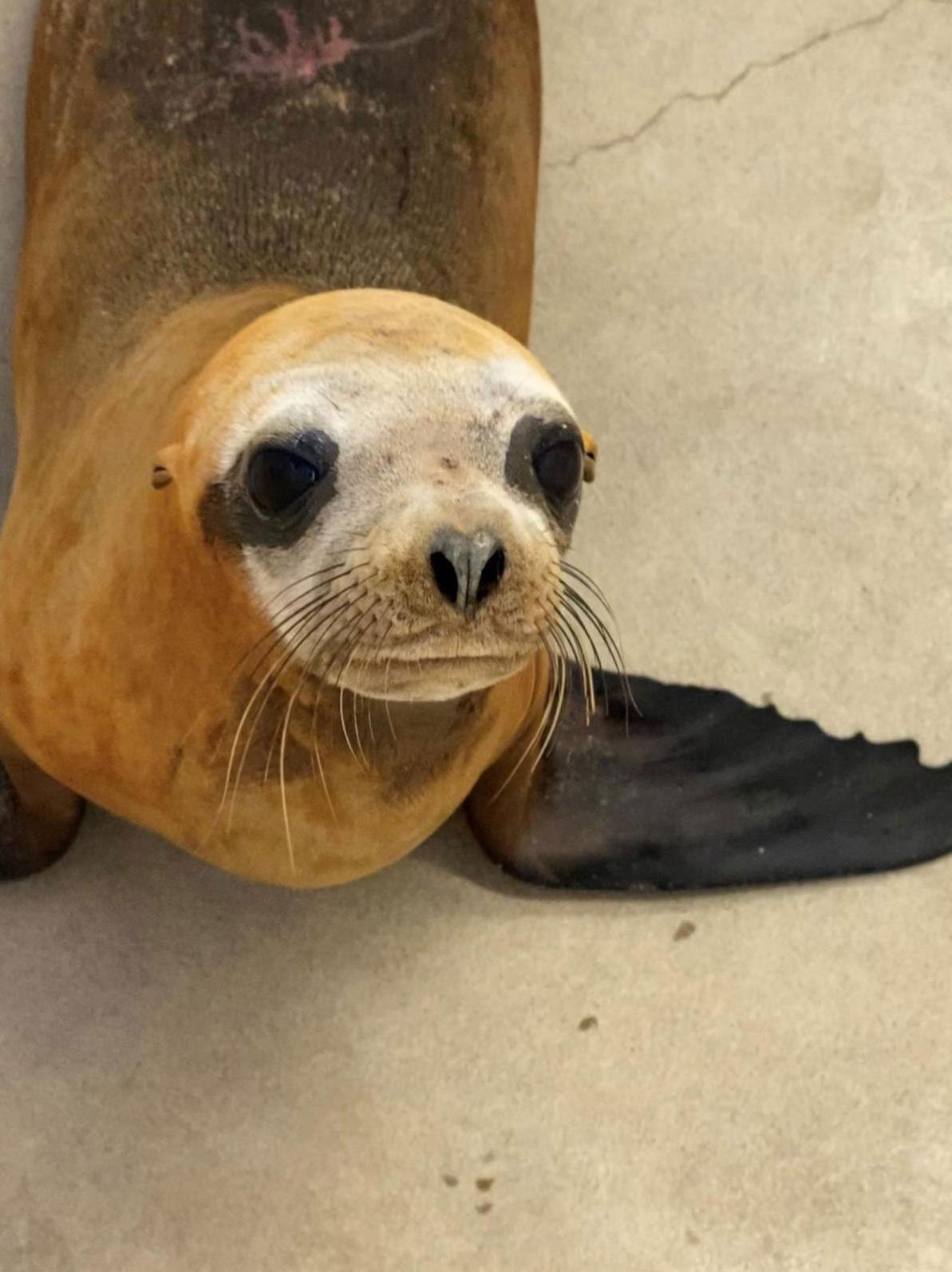 Police Files sea lion shot