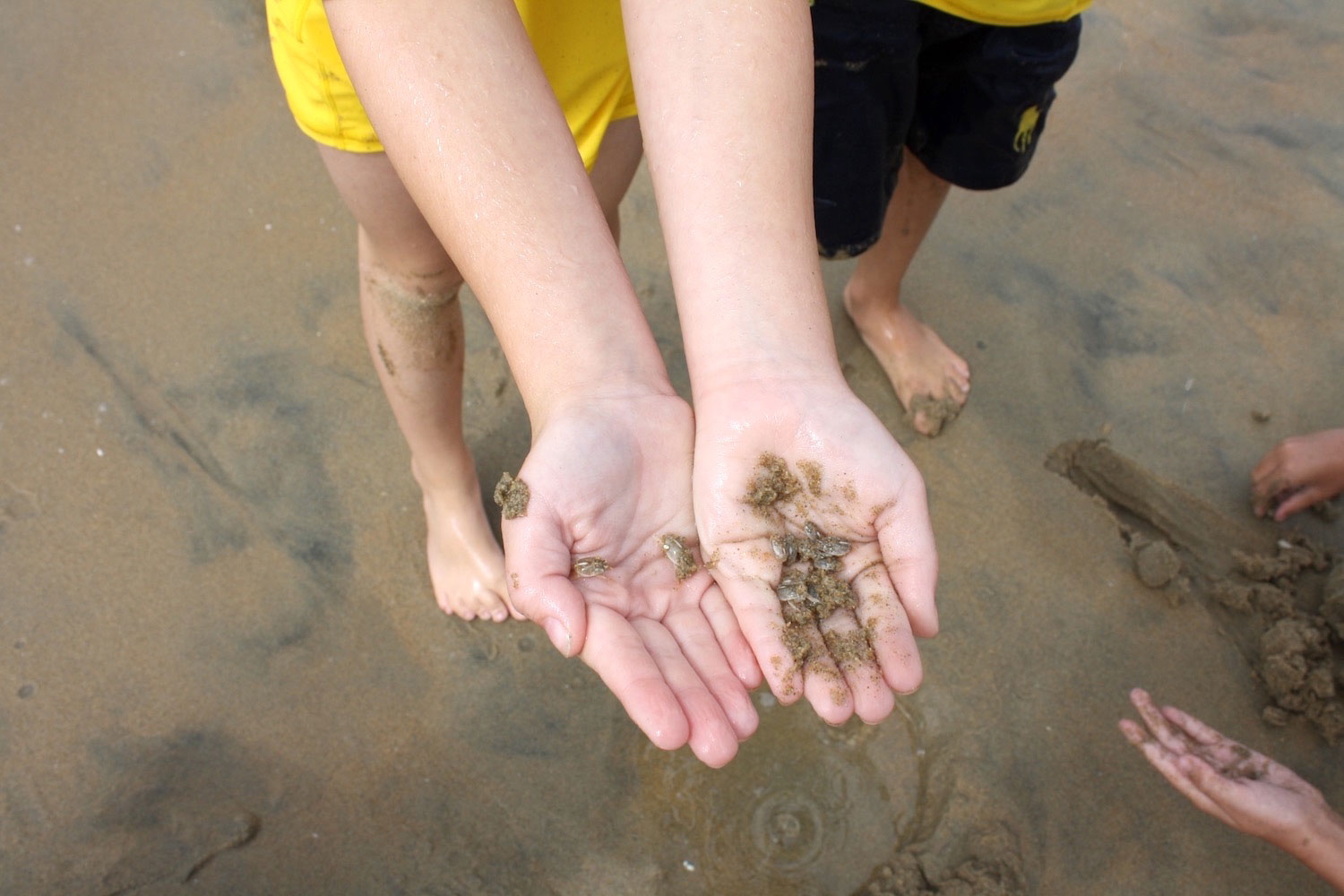 Beach Sports holding sand crabs 2