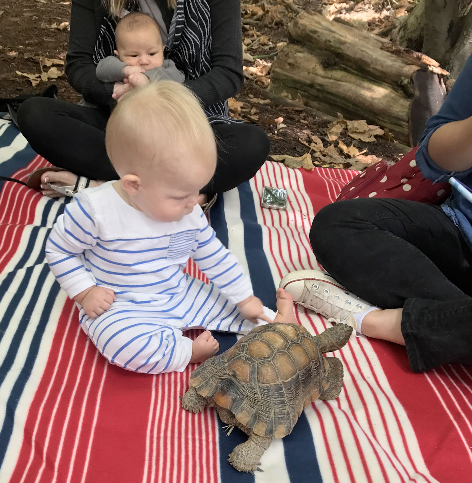 Tiny Naturalists baby with turtle