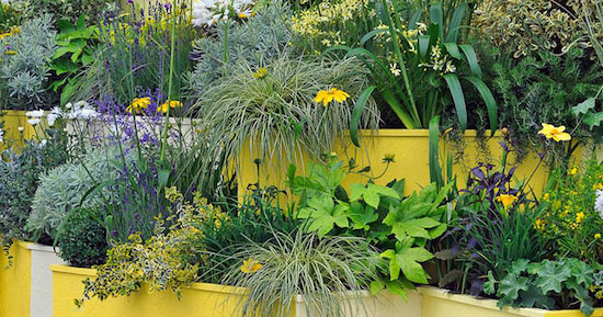 Small Container Gardening