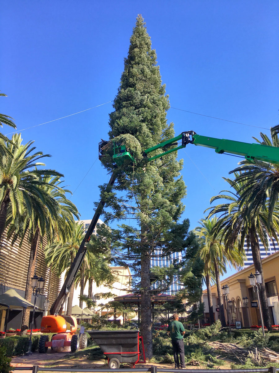 Newport Beach s Is the christmas tree at fashion island real